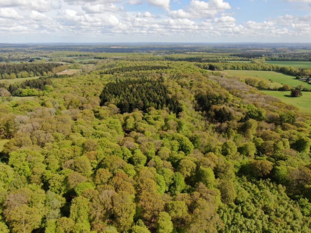 Heath End & Rumerhedge Wood