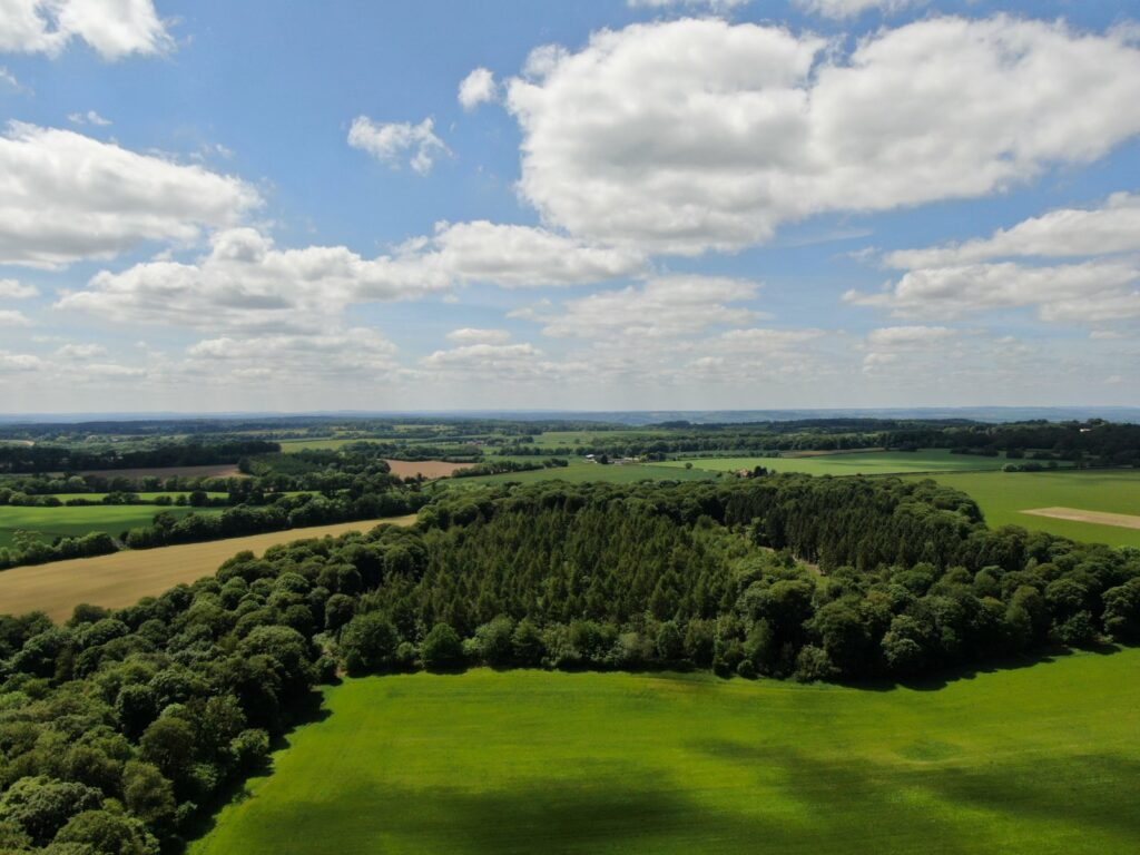 Groveridge Wood