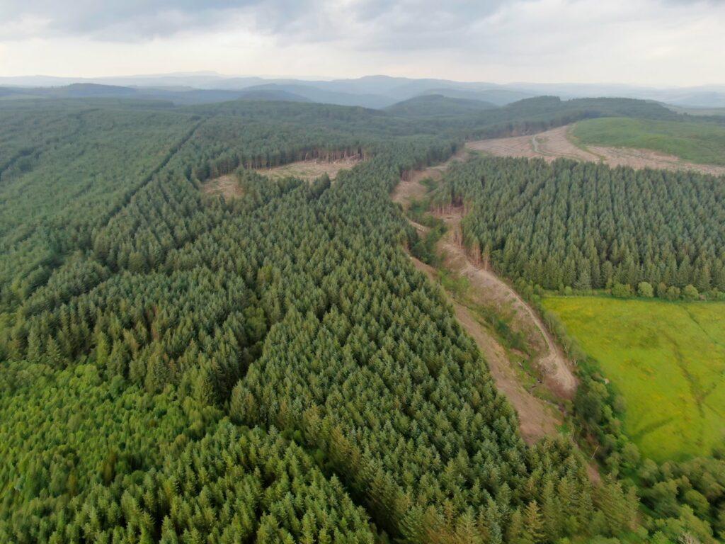Lletty Piod Forest