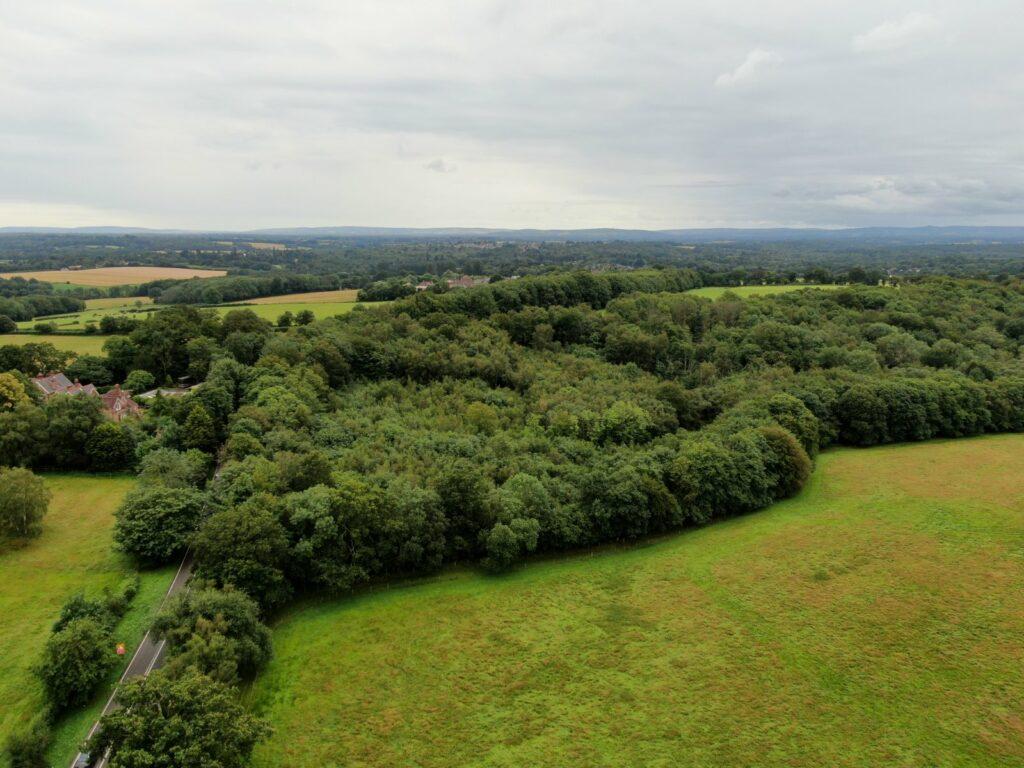 Hendall Wood